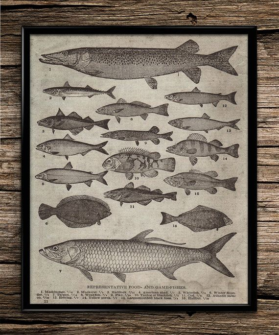 Vintage Types Of Fish | Vintage Prints | Office Decor | Home Decor |  Printable Wall