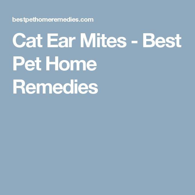 Cat Ear Mites - Best Pet Home Remedies