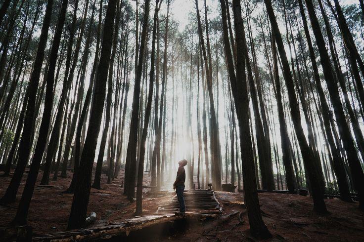 Sunrise at Hutan Pinus Imogiri Yogyakarta Indonesia [0C][6000x4000]