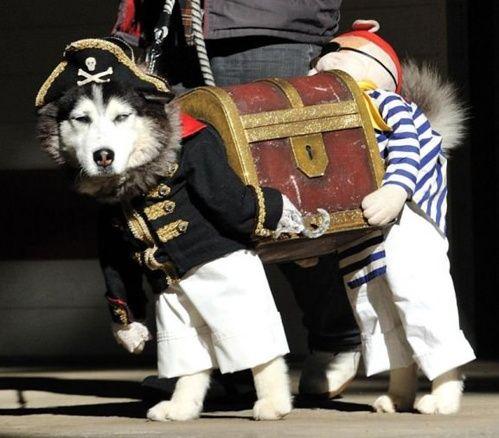 hilarious dog costume