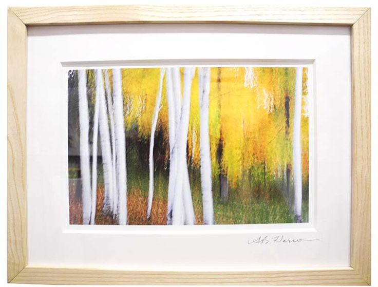 """Birch 661d 