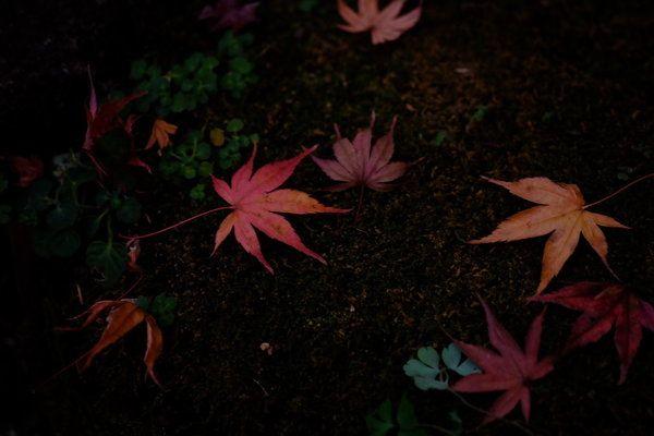 Bellísimas flores en Japón