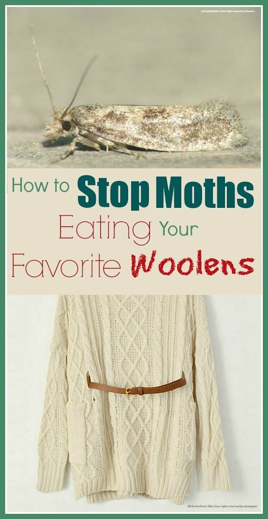 How To Get Rid Of Moths The Old We And The O 39 Jays