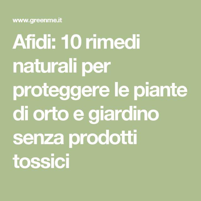 Afidi: 10 rimedi naturali per proteggere le piante di orto e giardino senza prodotti tossici