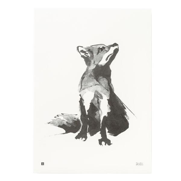 Kettu juliste, 50 x 70 cm