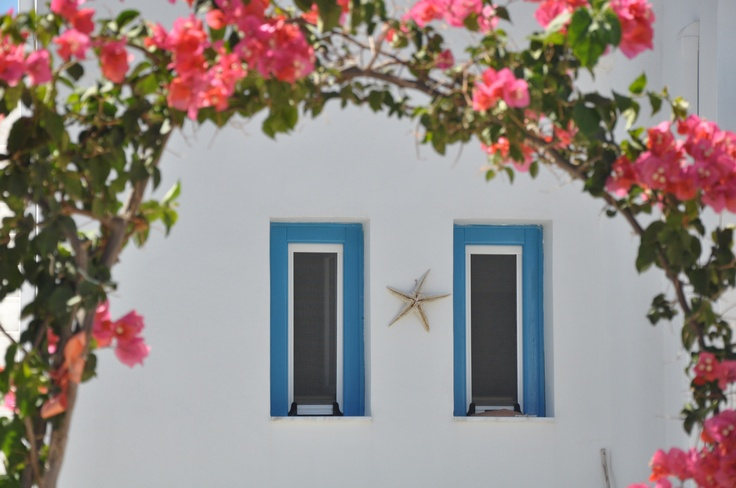 Nerium Oleander  #tilos #tilosisland #tilosgreece #dreamisland #dreamislandhotel #dreamislandtilos #greekislands #summer #sun #sea #beautiful #wow #wonderful #vacation #instamood #instagood #iphoneonly #i_promote_greece #instagram #colours #visitgreece #greeka