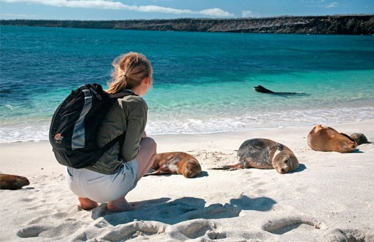 Woman near sunbathing sea lions, Galapagos, Ecuador. (© © John Warburton-Lee Photography/Alamy)