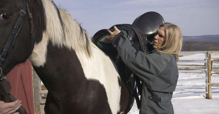 """Como evitar rebotar mientras montas a caballo. Cuando los jinetes hablan de la habilidad de cabalgar sin rebotar, utilizan el término """"asiento"""". Un jinete con un buen asiento se sienta profundamente en la silla y le permite a su espalda baja y su trasero moverse con el caballo. Su espalda inferior absorbe el impacto del movimiento del caballo. Un jinete con un asiento pobre está duro e ..."""