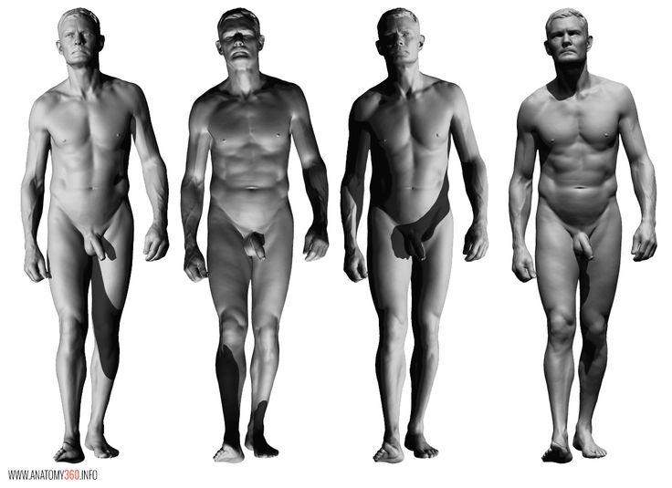 AnatomyReference_06.jpg (1286×935)