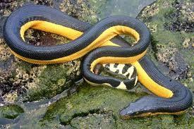 Resultado de imagen para serpiente marina