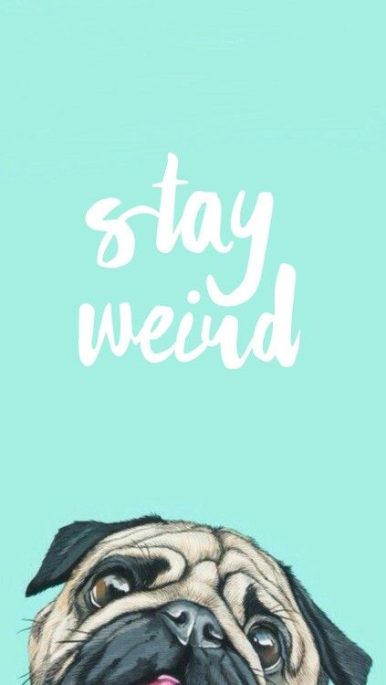 Stay weird iPhone wallpaper #lockscreen