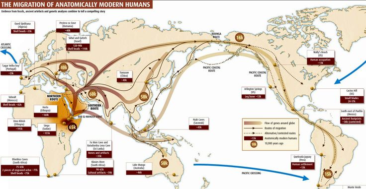 "How humans spread across the world: Human beings first left Africa about 60,000 years ago in a series of waves that peopled the globe. This map shows where those waves of migration went and when they occurred (the ""40K"" over Europe means humans arrived there about 40,000 years ago). You can see that humans have the most history in the Middle East, India and of course Africa itself (the map does not show the much longer history of migration within Africa)."