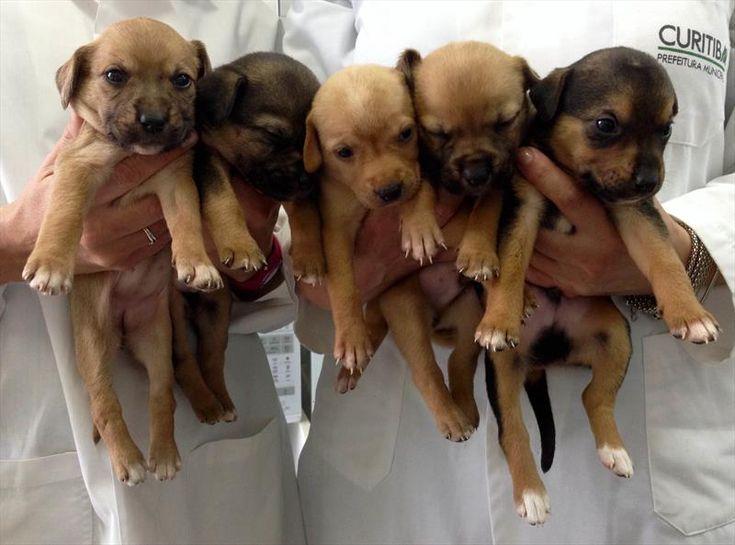 Cães para adoção no Centro de Controle de Zoonoses (CCZ) da Secretaria Municipal da Saúde. Curitiba, 28/04/2015 - Foto: Divulgação - Portal da Prefeitura de Curitiba.