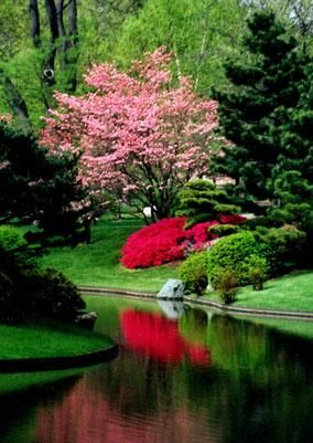Japanese Garden - love the limited use of color -- really pops against the lush greens