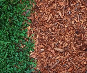 Backyard Oasis Ideas image of picture of beautiful backyards oasis 9 Types Of Mulch And Why You Should Use Them