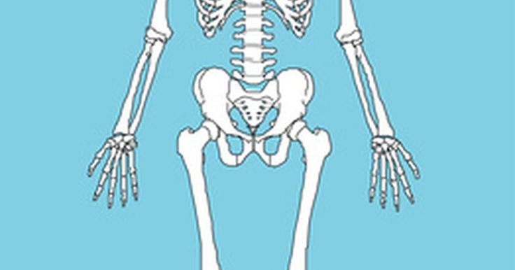 Significado dos termos lateral e medial em anatomia. Os profissionais das áreas médica, da saúde e educação física utilizam os termos lateral e medial para indicar onde estão as partes do corpo em relação umas às outras e para indicar as áreas lesadas de membros e órgãos.
