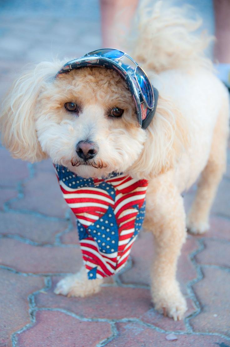 Im an American dog