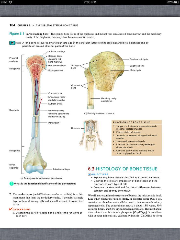 Chapter 5 the skeletal system
