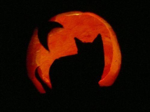 cat pumpkin | Sarah Kavitski | Flickr
