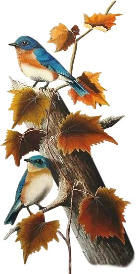 Blue Birds and Fall Leaves