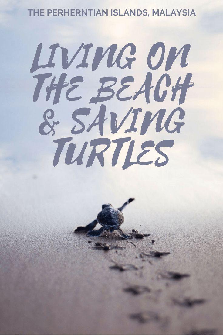Living on a beach, saving turtles in Malaysia