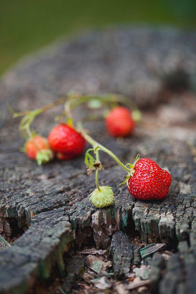 1000 id es sur le th me la cueillette des fraises sur pinterest fraises la confiture de - Comment cueillir des fraises ...