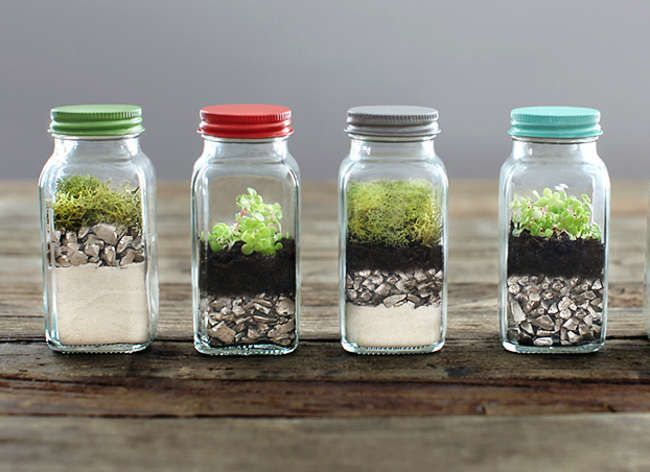 id al pour recycler des vieux r cipients comme les pots de confiture le terrarium met une. Black Bedroom Furniture Sets. Home Design Ideas