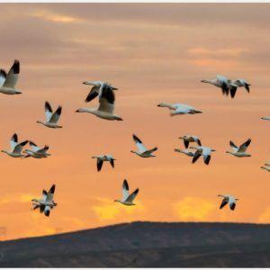 Flock Of Birds Flying Wallpaper | flock of birds flying wallpaper 1080p, flock of birds flying wallpaper desktop, flock of birds flying wallpaper hd, flock of birds flying wallpaper iphone