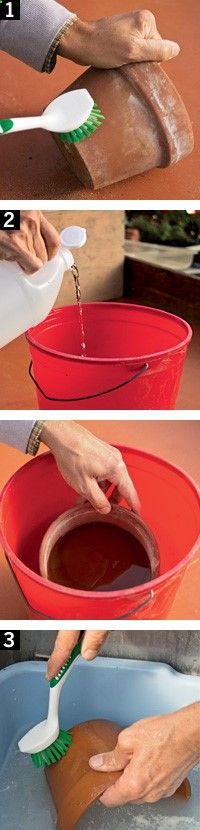 Clean Up Crusty Clay Pots:. Brush off loose dirt. Soak in vinegar solution (1 cup 5 percent acidity white vinegar in 3 or 4 cups water) 20-30 minutes, Brush as needed. Run pots through the quick-wash cycle of dishwasher to disinfect and clean them | Rodales Organic Life