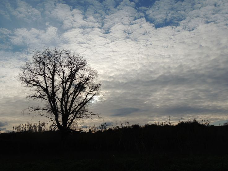 I love ...lonely trees