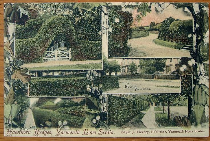 Hawthorne hedges (live fences) were Yarmouth's claim to fame once.  C'mon Yarmouth get planting again!