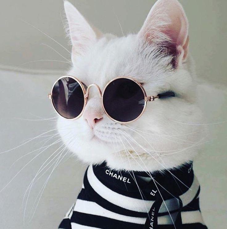 обладает фотки котиков на аву в скайпе для пацанов открытия завода шушарах