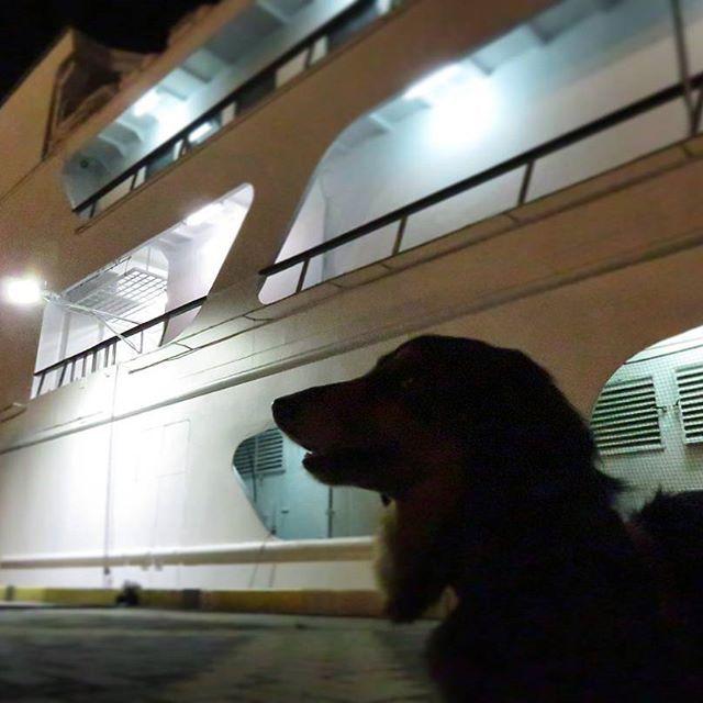 #おーちゃんです(´▽`)#dog#miniaturedachshund #KOBEHARBORLAND #kobe_port#how_lovely #concerto #MOSAIC#神戸#神戸ハーバーランド #神戸港#夜景#コンチェルト#高浜岸壁#ミニチュアダックス#ブラックタン#ふわもこ部 #愛犬#ペット#わんこ#可愛い#神戸港開港150年 #kobe_chuo
