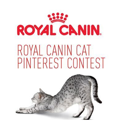 Pin for your chance to win in the Royal Canin Cat Pinterest Contest!