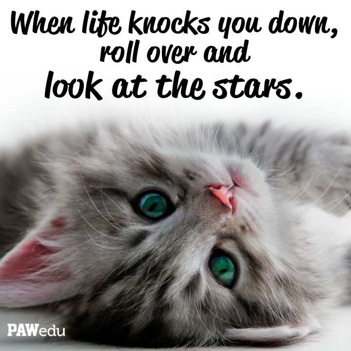 13 Best Inspiring Animal Quotes Images On Pinterest