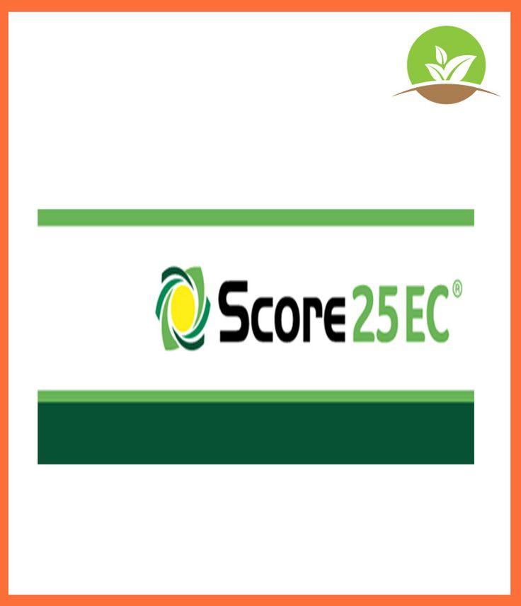 Score de SYNGENTA - Fungicida sistémico de acción preventiva y curativa. Protege el cultivo preventivamente.  [ Abolladura, Albaricoquero, Alcachofa, Alternaria, Antracnosis, Apio, Black-Rot, Brécol, Caqui, Cardos comestibles, Cerezo, Chirivía, Ciruelo, Cladosporosis, Clavel, Cribado, Dalia, Difenoconazol, Espárrago, Fresales, Guisantes verdes, Hinojo, Jardinería exterior doméstica, JED, Judías verde, Lechugas y similares, Mancha purpura, Manzano, Melocotonero, Micosfaerella, Monilia…