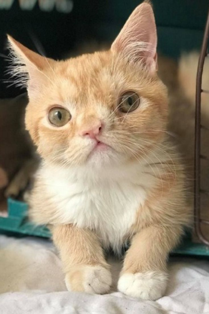 Vet Student Saves Special Kitten And Brought Her Back From The Brink Now Months Later Video Vet Student Special Kitty Ca Cute Cats Pretty Cats Kittens