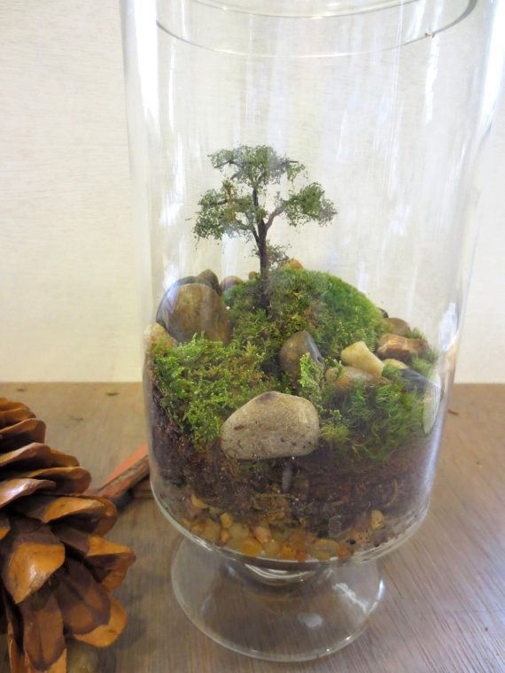 Long Ago and Far Away....Terrarium, Vibrant Moss Terrarium Indoor Garden Apartment Garden Live Moss Terrarium Miniature Landscape