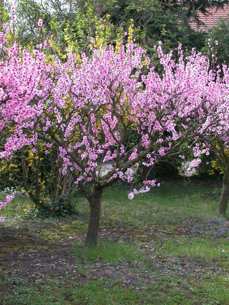 420 best images about renaissance garden on pinterest gardens prunus and hedges. Black Bedroom Furniture Sets. Home Design Ideas