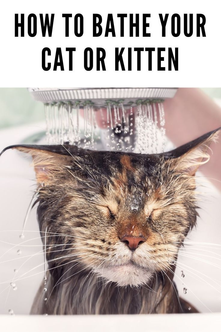 How To Bathe Your Cat Or Kitten Cats Cat Shampoo Cat Care