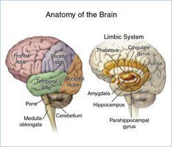 trauma effects on brain development abuse | 21st Century Bully Leave Lasting Impact - Promise ...