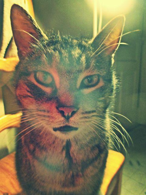 She Just Wouldn't Say -  friends cat Sofie - thetemenosjournal.com