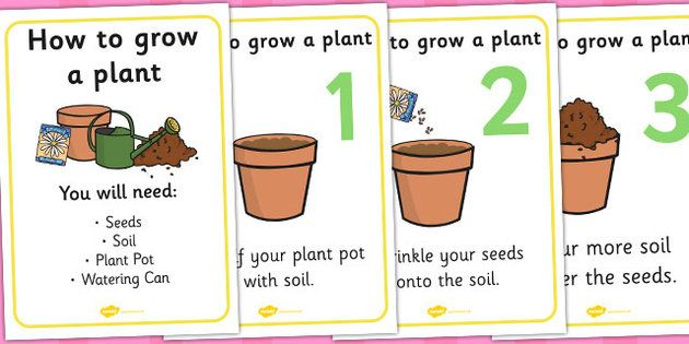 How To Grow A Plant Display Posters Growth Topic Foundation Stage Flower Knowledge And Understanding Of The World