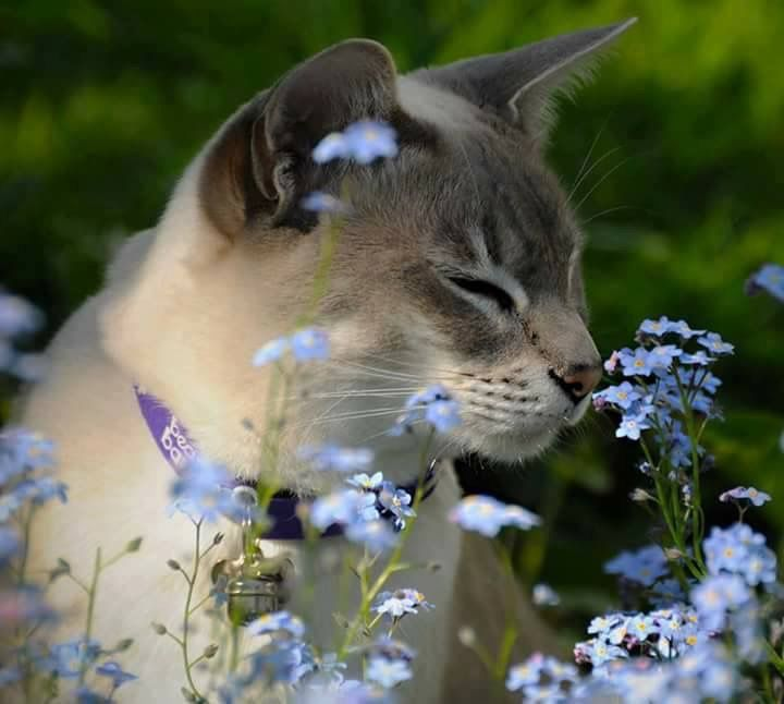 Aww...stop & smell the flower