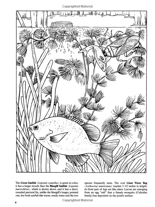 Freshwater Pond Coloring Book Dover Nature Annika Bernhard