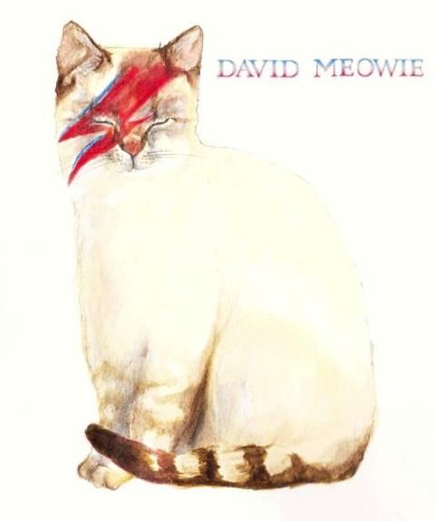 David Meowie #bowie #illustration