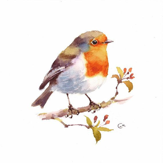 Watercolor Robin - Original Bird Illustration 7 4/5 x 7 4/5 inches