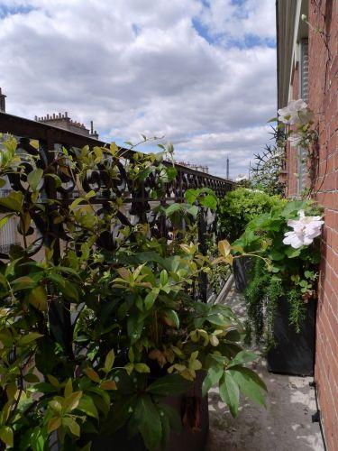 Les 164 meilleures images propos de balcon jardin for Paysagiste balcon