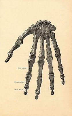 Instant Halloween Art Printable Download - Hand Bones - The Graphics Fairy