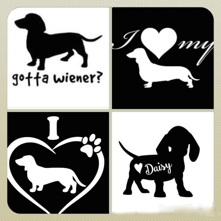 Excited to share the latest addition to my etsy shop daschund decal daschund